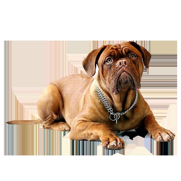Viste Tu Mascota Productos Para Perros Gatos Y Todo